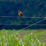 exciting-birding-opportunity-garlington-residents-garlington-estate-development-farm-hilton-midlands-kzn