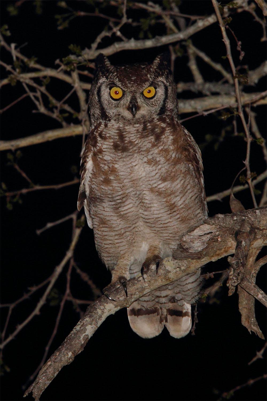 Owl-Spotted-Eagle-rockjumper-birding-amenities-garlington-estate-equipment-luxury-country-development-hilton-midlands-meander